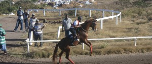 Horse racing on Nevis